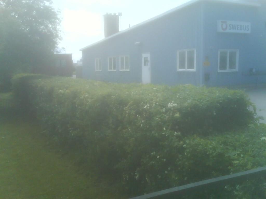 Hedge, post-cut